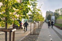 Heimische Stadt- und Straßenbäume sind vom Klimawandel bedroht. Können klimaresilientere Arten eine Säule der Klimaanpassungsstrategie sein?