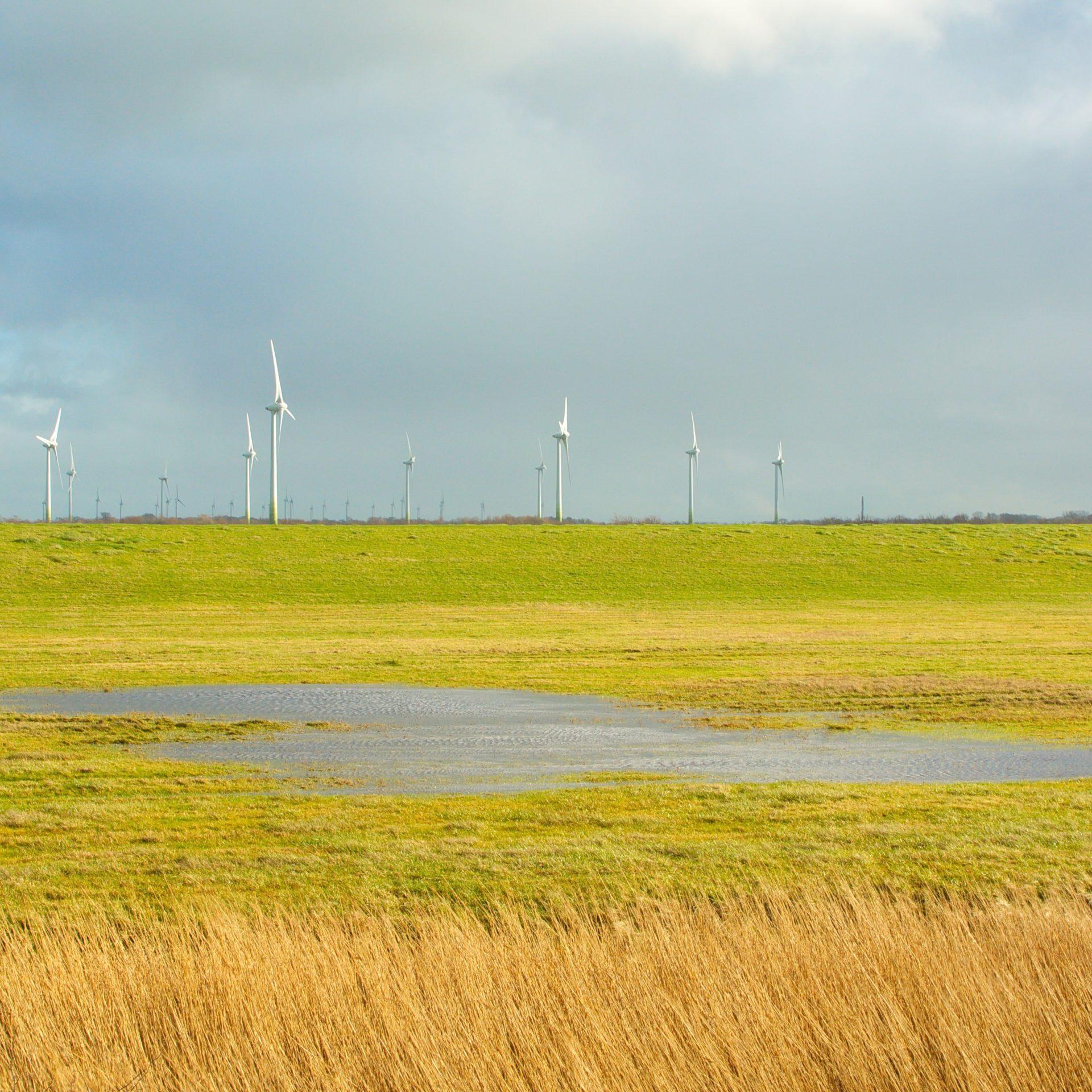 Windkraft und Artenschutz müssen sich verinbaren lassen.