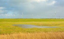 Windkraft und Artenschutz müssen miteinander vereinbar sein.
